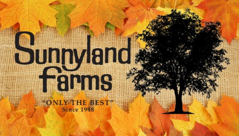 Fall-Suunyland.jpg